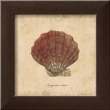 Shells II Prints by Stephanie Marrott