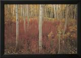 Discovery: Aspen Trees Prints