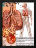 Respiratory System Prints