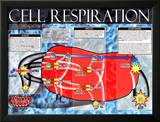 Cellular Respiration Prints