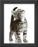 Curious Cat Print