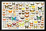 Butterflies of the World Chart Poster