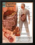 Digestive System Art