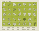 Catalog 1 - Trees Serigraph by  Brainstorm