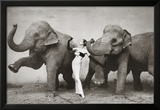 Dovima with Elephants, c.1955 Prints by Richard Avedon