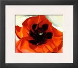 Poppy Art by Georgia O'Keeffe