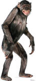 Chimpanzee Lifesize Standup Poster Silhouette d&#233;coup&#233;e