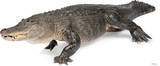 American Alligator Lifesize Standup Poster Stand Up