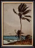 Palm Tree, Nassau Prints by Winslow Homer