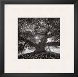 Under Camperdown Elm, Prospect Park Print by Henri Silberman