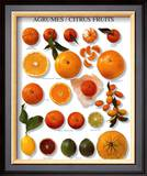 Citrus Fruit Posters