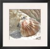 Coral Shell III Poster by Donna Geissler