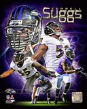 Terrell Suggs 2013 Portrait Plus Photo