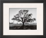 Oak Tree, Sunrise Poster by Ansel Adams
