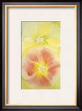 Pink and Yellow Hollyhocks, c.1952 Posters by Georgia O'Keeffe