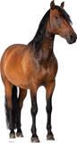Horse Lifesize Standup Silhouette en carton
