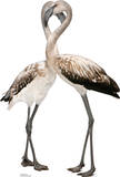 Flamingos - Love Birds Lifesize Standup Cardboard Cutouts