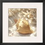 Coral Shell IV Prints by Donna Geissler