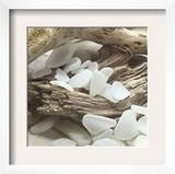 Sea Glass, White Prints by Celia Pearson