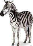 Zebra Lifesize Standup Silhouettes découpées en carton