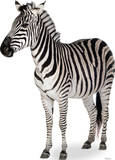 Zebra Lifesize Standup Papfigurer