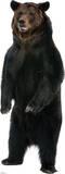 Brown Bear Lifesize Standup Silhouette en carton