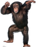 Young Chimpanzee Lifesize Standup Poster Imagen a tamao natural