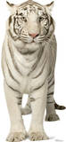 White Tiger Lifesize Standup Cardboard Cutouts