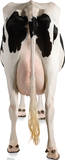 Cow&#39;s Rear Lifesize Standup Poster Stand Up