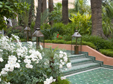 White Roses and Palm Trees in Garden at La Mamounia Hotel in Marrakech, Morocco, North Africa Photographic Print by Ellen Rooney