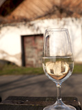 Glass of White Wine (Riesling) at Wine Cellar, Village of Vlkos, Brnensko, Czech Republic, Europe Photographic Print by Richard Nebesky