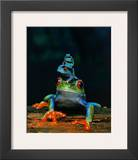 Frogs Print
