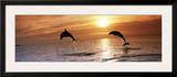Sunset Dolphins Posters by Stuart Westmoreland