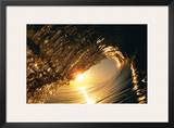 Golden Sunrise Curl Poster by Woody Woodworth
