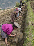 Female Farmers at Work in Rice Terraces, Radi, Eastern Bhutan, Bhutan, Asia Photographic Print by Eitan Simanor