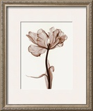 Parrot Tulips I Posters by Steven N. Meyers