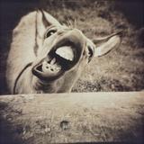 Bleating  Goat Photographie par Theo Westenberger