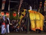 Ceremonial Elephant in the Navam Maha Perahera, Colombo, Sri Lanka, Asia Photographic Print by Peter Barritt