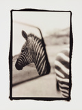 Zebra in the Mirror 1 Photographic Print by Theo Westenberger
