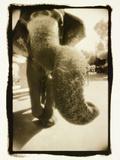 Elephant's Trunk Photographic Print by Theo Westenberger