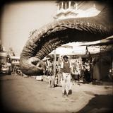Elephant Trunk at Indian Bazaar Photographie par Theo Westenberger