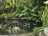 Koi Fish Pond, Manila, Philippines, Southeast Asia, Asia Photographic Print by Luca Tettoni