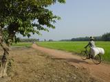 Farmer Carrying Big Bag on Her Bicycle by Rice Paddies, Myaungma, Irrawaddy Delta, Myanmar (Burma) Fotoprint van Eitan Simanor