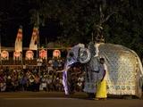 Ceremonial Elephant in the Navam Maha Perahera, Colombo, Sri Lanka Photographic Print by Peter Barritt