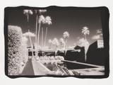 Palm Springs 6 Reproduction photographique par Theo Westenberger