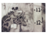 13' Giraffe Photographic Print by Theo Westenberger