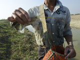 Large Shrimp from Waterway in Irrawaddy Delta, Myanmar (Burma), Asia Photographic Print by Eitan Simanor