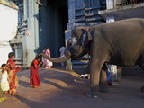 Elephant Benediction, Kamakshi Amman, Kanchipuram, Tamil Nadu, India, Asia Photographic Print by  Tuul
