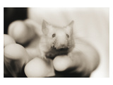 Mouse in Hand Photographic Print by Theo Westenberger