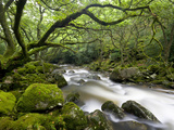 Rocky River Plym Near Shaugh Prior in Dartmoor National Park, Devon, England, United Kingdom Fotografie-Druck von Adam Burton
